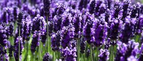 Numerology at the Lavender...